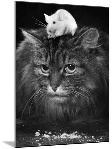 Animal Friendships: Cats and Mice--Mounted Photographic Print