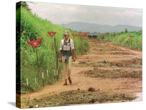 Princess Diana in Minefield Outside Haunbo Angola Endorsing the Red Cross Campaign--Stretched Canvas Print