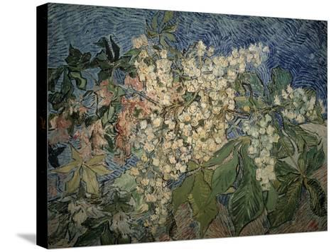 Blossoming Chestnut Branches-Vincent van Gogh-Stretched Canvas Print