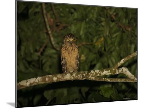 Front View of a Buffy Fish Owl-Tim Laman-Mounted Photographic Print