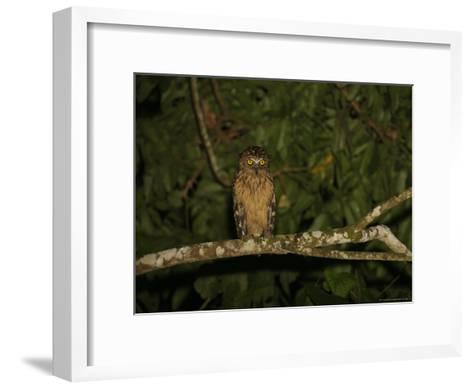 Front View of a Buffy Fish Owl-Tim Laman-Framed Art Print