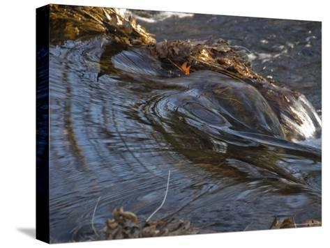 Stream Flowing Over Rocks and Leaves-Todd Gipstein-Stretched Canvas Print