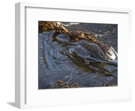 Stream Flowing Over Rocks and Leaves-Todd Gipstein-Framed Art Print