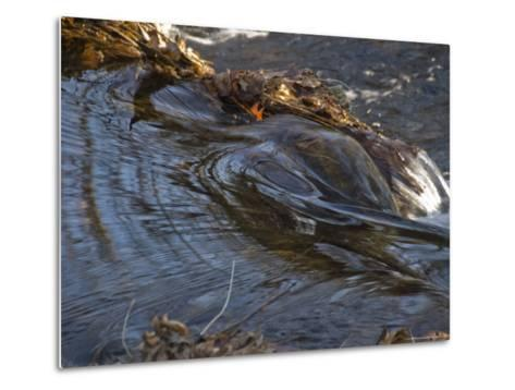 Stream Flowing Over Rocks and Leaves-Todd Gipstein-Metal Print