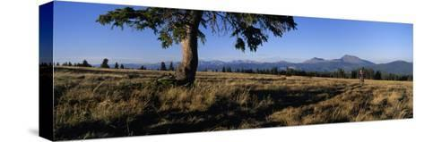Mountain Biking on the Colorado Trail-Bill Hatcher-Stretched Canvas Print