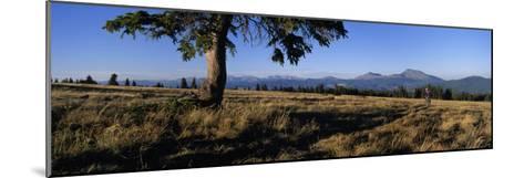 Mountain Biking on the Colorado Trail-Bill Hatcher-Mounted Photographic Print