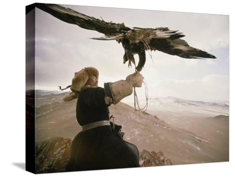Kazakh Hunter Strains to Support a Golden Eagle-David Edwards-Stretched Canvas Print