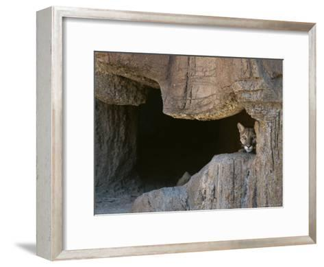 Mountain Lion Peeks Out of a Cave Opening-Tom Murphy-Framed Art Print