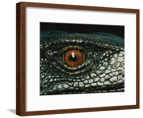 Close View of the Eye of a New Species of Monitor Lizard-Tim Laman-Framed Art Print