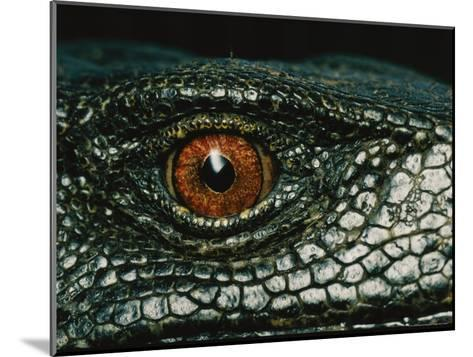 Close View of the Eye of a New Species of Monitor Lizard-Tim Laman-Mounted Photographic Print