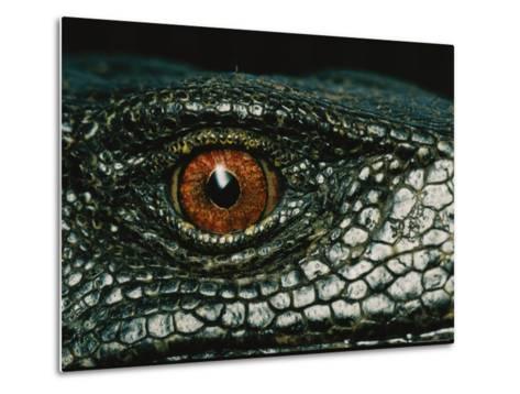 Close View of the Eye of a New Species of Monitor Lizard-Tim Laman-Metal Print