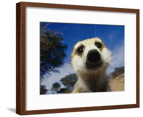 Close View of a Meerkat's Face-Mattias Klum-Framed Art Print