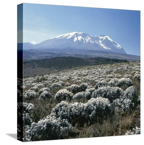 Mount Kilimanjaro, the Breach Wall, as Seen From Shira Plateau-David Pluth-Stretched Canvas Print