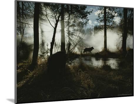 Gray Wolf, Canis Lupus, in Silhouette Passes By a Woodland Pond-Jim And Jamie Dutcher-Mounted Photographic Print