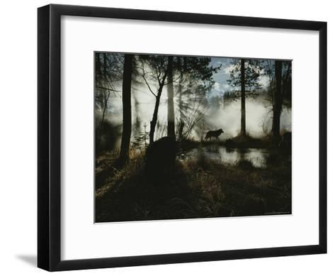Gray Wolf, Canis Lupus, in Silhouette Passes By a Woodland Pond-Jim And Jamie Dutcher-Framed Art Print