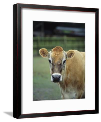 Close View of a Cow-Michael Melford-Framed Art Print
