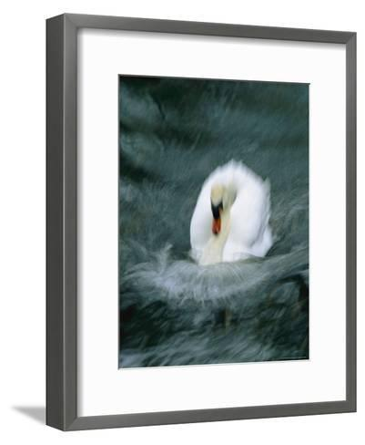 Time Exposure of a Swan Swimming-Michael Melford-Framed Art Print