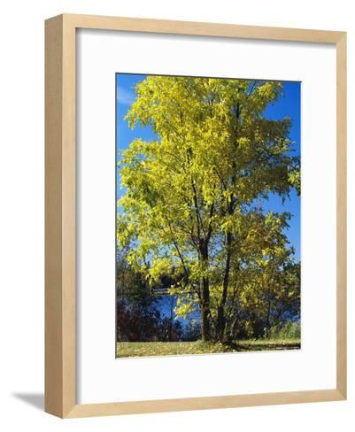 An Oak Tree in Early Fall Foliage Stands on the Edge of Falcon Lake-Raymond Gehman-Framed Art Print