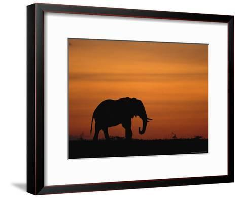An African Elephant in Silhouette at Dusk-Norbert Rosing-Framed Art Print