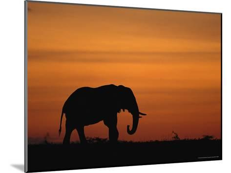 An African Elephant in Silhouette at Dusk-Norbert Rosing-Mounted Photographic Print