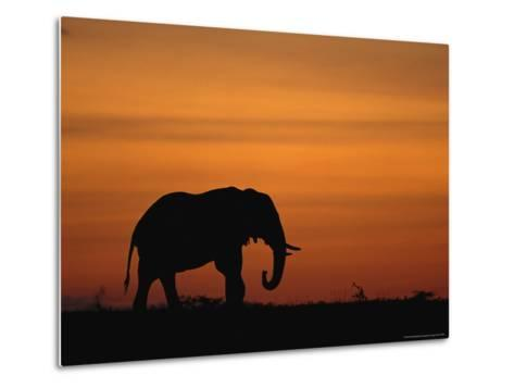 An African Elephant in Silhouette at Dusk-Norbert Rosing-Metal Print