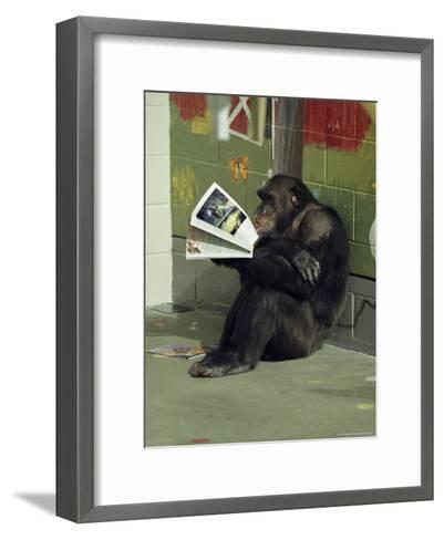 Captive Chimpanzee Looks Through a Magazine-Steve Winter-Framed Art Print