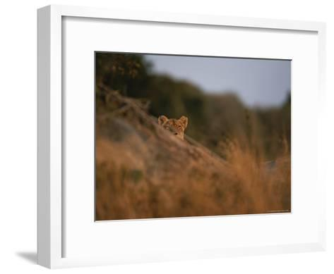 Lion Peers From the Cover of a Large Rock-Kim Wolhuter-Framed Art Print