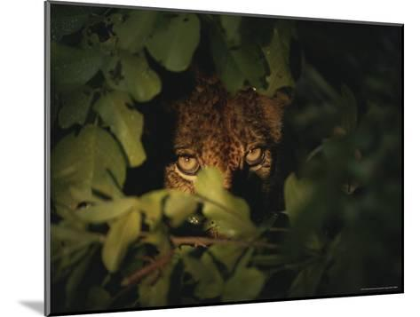 Cheetah Peers From the Cover of Brush-Kim Wolhuter-Mounted Photographic Print
