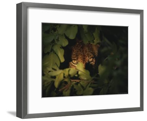 Cheetah Peers From the Cover of Brush-Kim Wolhuter-Framed Art Print