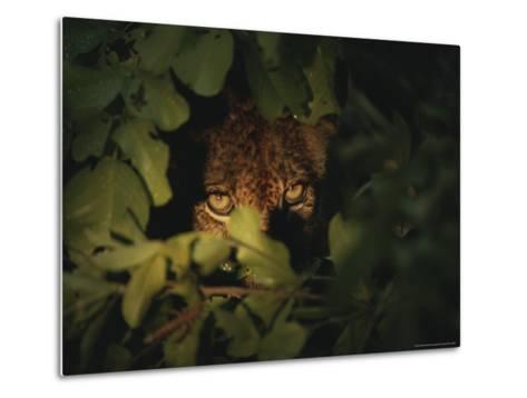Cheetah Peers From the Cover of Brush-Kim Wolhuter-Metal Print