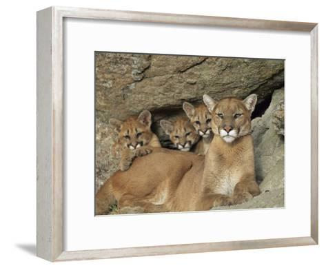 Mountain Lion Mother with Her Young Sits at the Mouth of a Cave-Norbert Rosing-Framed Art Print
