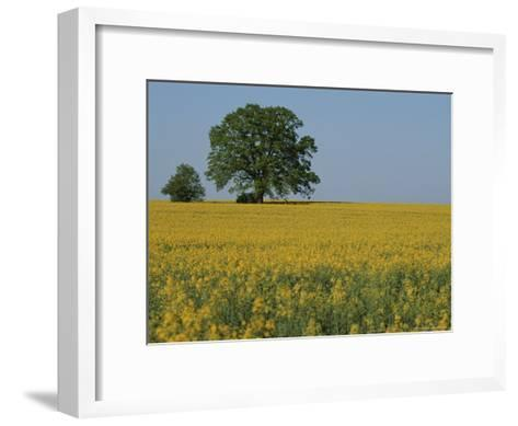Pair of Trees Stand Among a Field of Yellow Flowers-Norbert Rosing-Framed Art Print