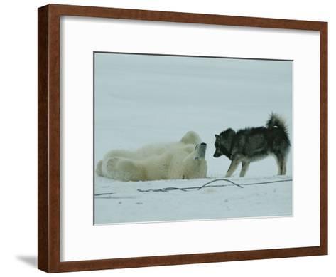 Polar Bear Lolls on His Back While a Husky Looks On-Norbert Rosing-Framed Art Print