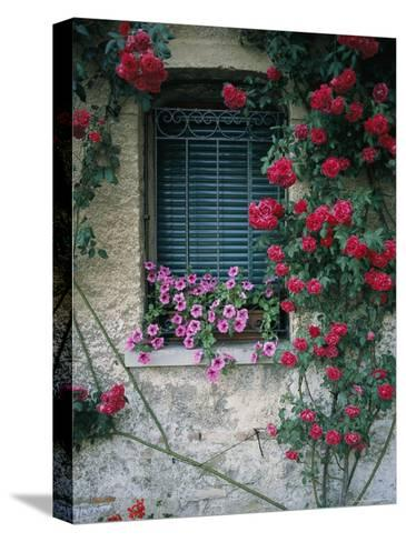 Window on Stucco Wall Surrounded by Red Roses with Petunia Flower Box-Todd Gipstein-Stretched Canvas Print