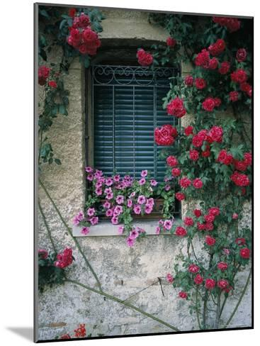 Window on Stucco Wall Surrounded by Red Roses with Petunia Flower Box-Todd Gipstein-Mounted Photographic Print