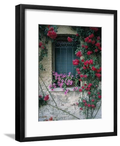 Window on Stucco Wall Surrounded by Red Roses with Petunia Flower Box-Todd Gipstein-Framed Art Print