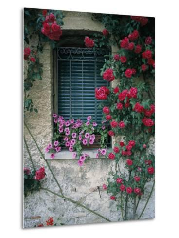 Window on Stucco Wall Surrounded by Red Roses with Petunia Flower Box-Todd Gipstein-Metal Print