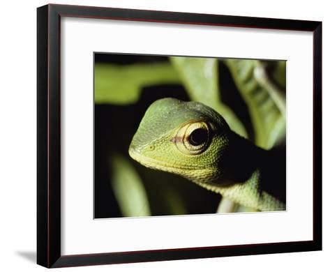 Close View of a Lizard-Peter Carsten-Framed Art Print