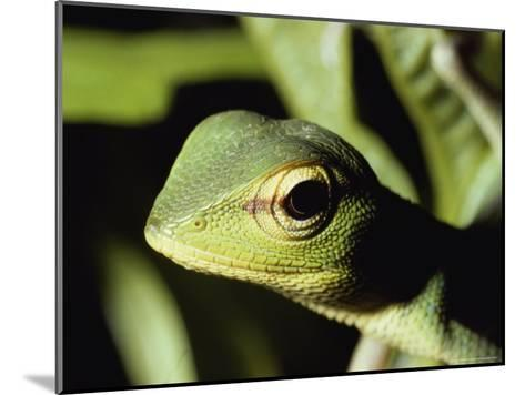Close View of a Lizard-Peter Carsten-Mounted Photographic Print