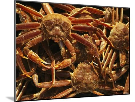 Fisherman's Catch of King Crab-Michael Melford-Mounted Photographic Print