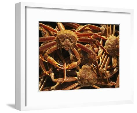 Fisherman's Catch of King Crab-Michael Melford-Framed Art Print