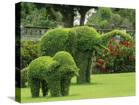 Elephant Topiaries in a Formal Garden-Michael Melford-Stretched Canvas Print