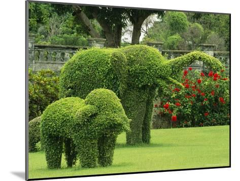 Elephant Topiaries in a Formal Garden-Michael Melford-Mounted Photographic Print