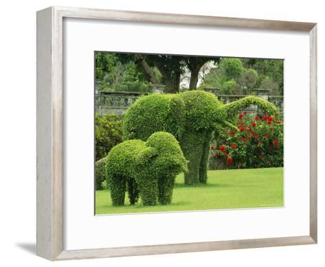Elephant Topiaries in a Formal Garden-Michael Melford-Framed Art Print