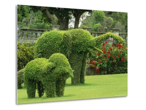 Elephant Topiaries in a Formal Garden-Michael Melford-Metal Print