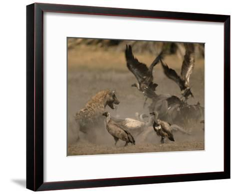 Spotted Hyena and White-Backed Vultures Duel over a Carcass-Beverly Joubert-Framed Art Print