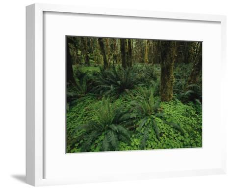 Woodland Rain Forest View with Mosses, Ferns, and Wood Sorrel-Melissa Farlow-Framed Art Print