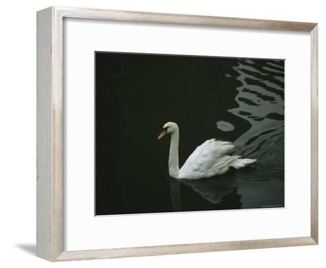 Swan Swims on a Pond Near the Imperial Palace-xPacifica-Framed Art Print