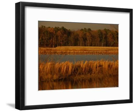 Autumn View of Canada Geese on a Freshwater Marsh at Twilight-Raymond Gehman-Framed Art Print