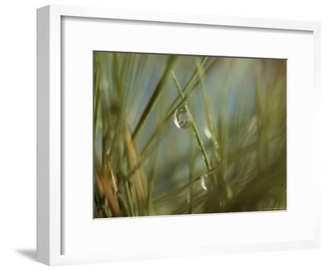 Water Droplets Clinging To Blades of Grass-Todd Gipstein-Framed Art Print
